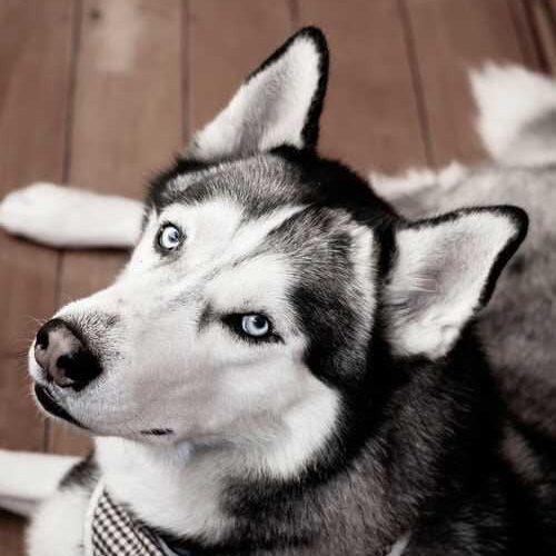 DOG101 (2)